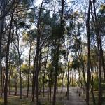 Sentieri tra gli alberi Balestrate