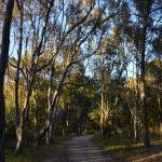 Sentiero bosco Balestrate