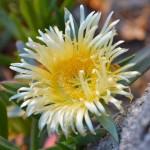 Fiore Bosco mare Balestrate