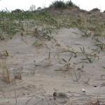 Dune e vegetazione