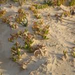 Dune particolare Balestrate