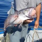 Pesca Balestrate