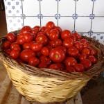 Pomodori freschi raccolto passata salsa casa